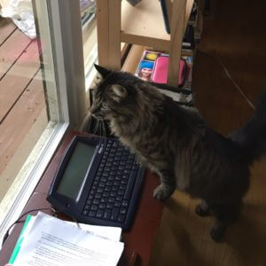 Frank the Writer Cat